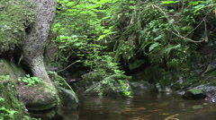 Drought in rain forest Stock Footage