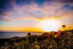 Pacific Coast Flowers Stock Photos