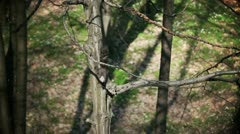 Camera shaking is illustrating squirrel movement Stock Footage