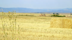 Rack focus to hay in field Stock Footage