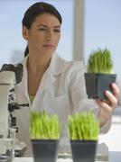 Scientist examining plants in pharmaceutical laboratory Stock Photos