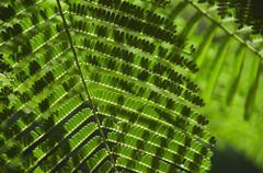 Close up of topical plant, Bermuda Stock Photos