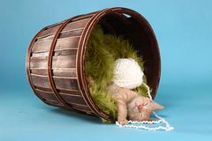 Little orange tabby kitten in studio Stock Photos