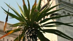 Zoom out of palm tree in front of the castle Stock Footage