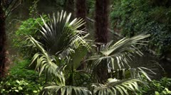 A palm tree in garden Stock Footage