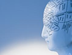Model of human brain - stock photo