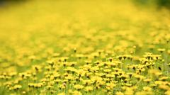 Yellow flowers field Stock Photos