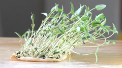 Bean sprouts in wind Stock Footage