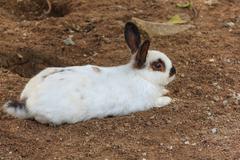 white bunny on ground - stock photo