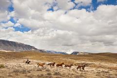Cowboy herding horses Stock Photos