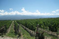 Vineyards argentina Stock Photos