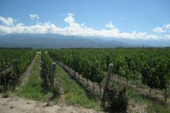 Vine yards in the andes Stock Photos