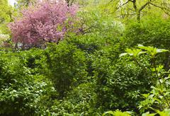 Green trees and cherry tree in Madison Square Park - stock photo