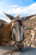Stock Photo of close up view of donkey