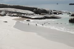 The Beach of king penguins at the South Africa shore - stock photo