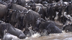 Africa, wildebeest jumping in river, true 240FPS Slo-mo - stock footage