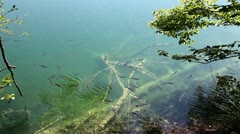 Shoal of fishes swimming inthe Plitvice lake Stock Footage