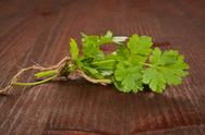 Stock Photo of coriander bunch. culinary herbs