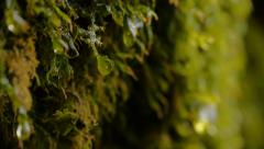 Water Dripping Off Moss - stock footage
