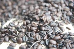 Toasted coffe beans palomino sierra nevada colombia Stock Photos