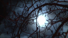 Full moon though branches closeup Stock Footage