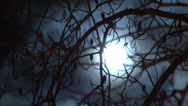 Stock Video Footage of full moon though branches closeup