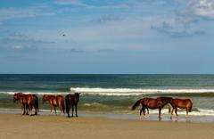 Portrait herd of wild horses at ocean Stock Photos