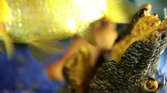 Close up shot of a gold fish in a fish tank Stock Footage