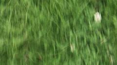 Cornfield Sweet Corn Aerial Stock Footage