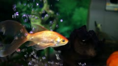 Stock Video Footage of fishes and corals in a fish tank