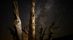 4K Perseid Meteor Shower Bristlecone Pine 03 Dolly R Milky Way Time Lapse Stock Footage