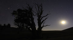 4K Perseid Meteor Shower Bristlecone Pine 06 Dolly In R Milky Way Time Lapse Stock Footage