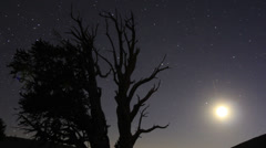 4KPerseid Meteor Shower Bristlecone Pine 07  Tilt Up Dolly Milkyway Timelapse Stock Footage