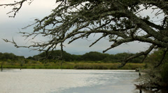 Dying tree over looks bay and marshy land Stock Footage