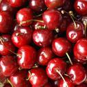 Stock Photo of cherry