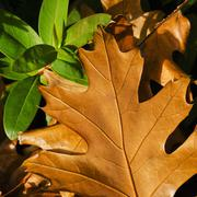 Close-up of brownish and green leaves Stock Photos
