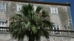 Close up shot of an old building`s facade with a palm tree in the middle Stock Footage