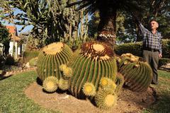Cactus plants Stock Photos