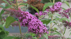 Butterflies on a flower Stock Footage