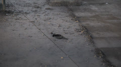 Construction site scrape cement Stock Footage