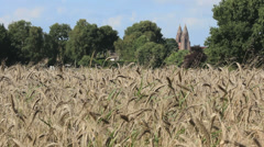 Grainfield and a church Stock Footage
