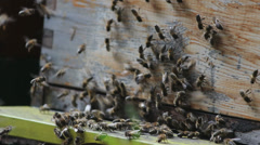 Bees entering the hive Stock Footage