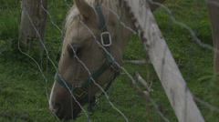 White Horse Eating Through Fence - 4K Ultra High Definition Stock Footage