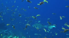 Many fish in blue water - HD Stock Footage