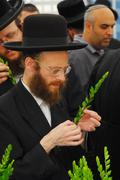 four species market for jewish holiday of sukkot - stock photo