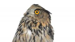 Stock Video Footage of close-up of an eurasian eagle owl looking around