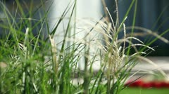Shot of grass and fountain in beautiful garden Stock Footage