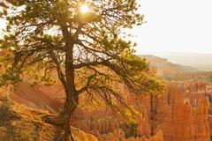 Bryce Amphitheater, Sun shining through tree Stock Photos