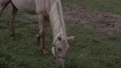 White Horse Eating in Field Stock Footage