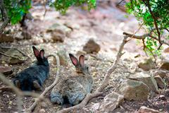 Two fluffy bunny lying down resting in the shade of a tree, rear view Stock Photos